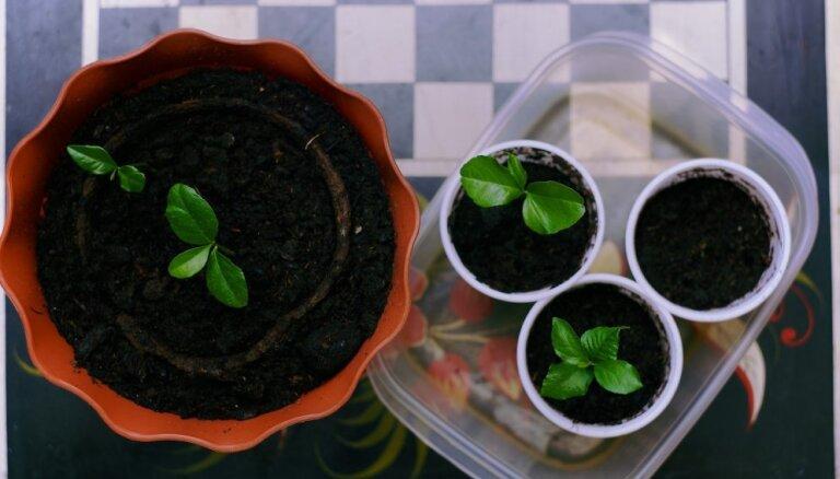 No vasaras puķēm līdz gurķiem un paprikai – sēšanas padomu ābece