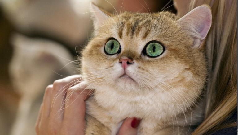 10 самых популярных пород кошек в Латвии