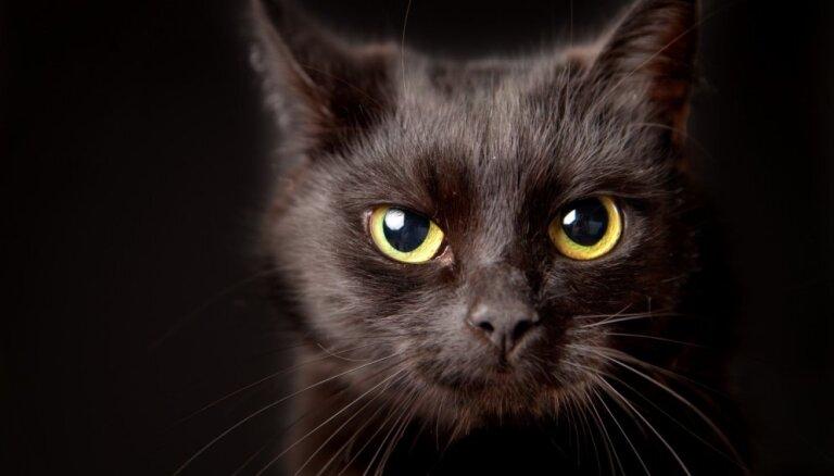 Septiņi interesanti fakti par ķecerīgajiem melnajiem kaķiem