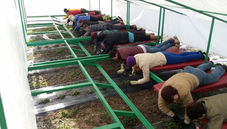 Video: Platforma, kas palīdz vietējā saimniecībā veiklāk novākt zemenes