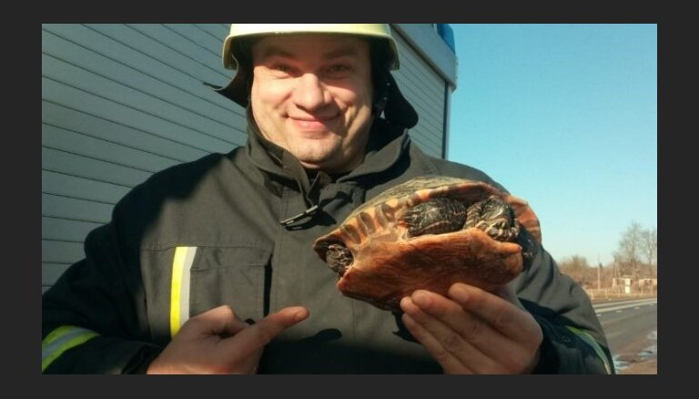 Салдус: из замерзшей реки спасли черепаху