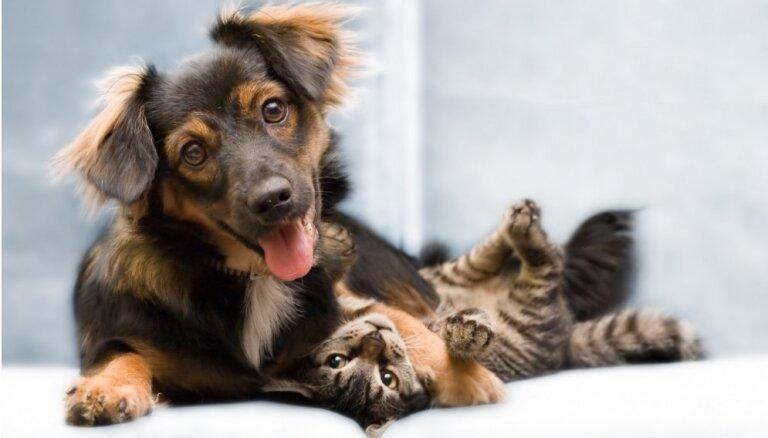 Начат сбор подписей за более строгие требования к владельцам домашних животных