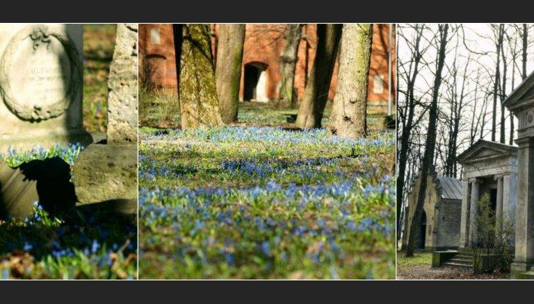 Foto: Pavasara uzvaras gājiens Lielajos kapos – skaista pastaiga starp pieminekļiem