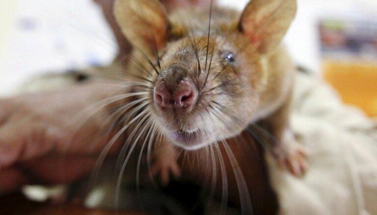Blusas, peles un citi nevēlamie mājas mošķi: padomu ābece to apkarošanai