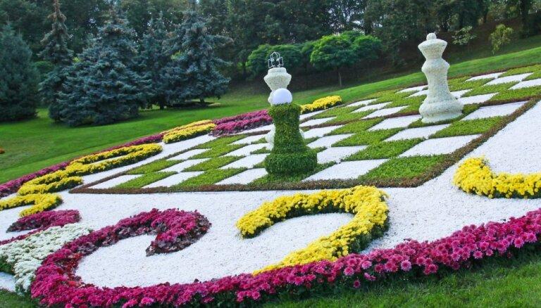Gluži kā šaha laukums: idejas neparastu dobju izveidošanai dārzā