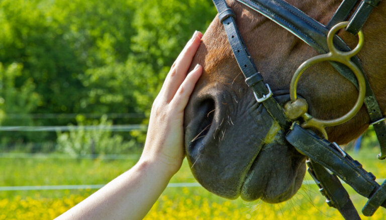 Zirgu lielākie ienaidnieki – barotāji un paijātāji