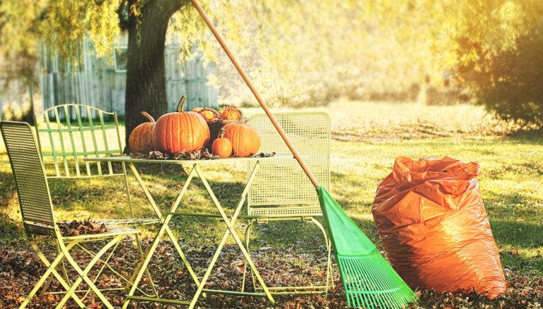 Kas jāizdara dārzā un pagalmā līdz 10.novembrim?