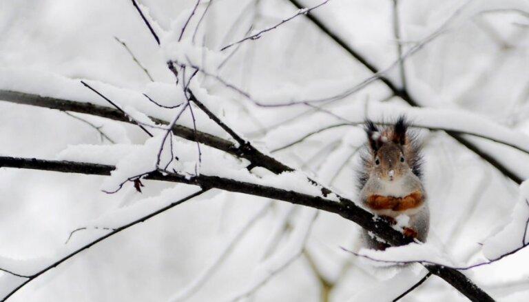 Новогодние праздники будут рекордно теплыми, в январе похолодает до -20