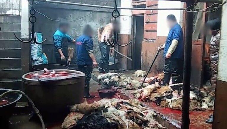 Izplatīts šokējošs video, kurā redzama suņu ādu dīrāšana Ķīnā