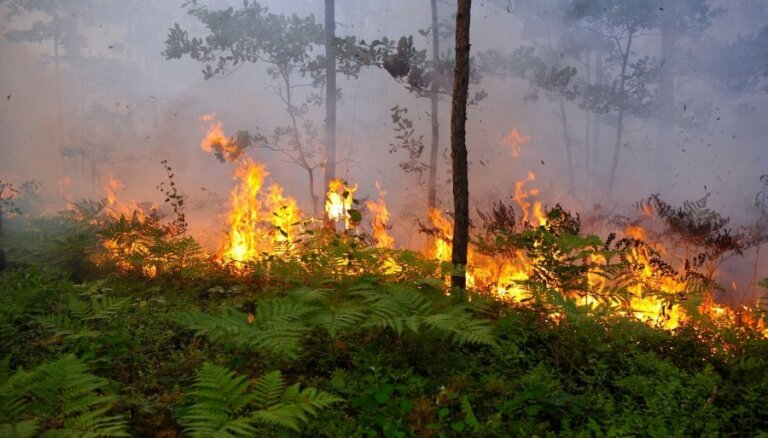 Šogad VUGD dzēsis 117 meža ugunsgrēkus