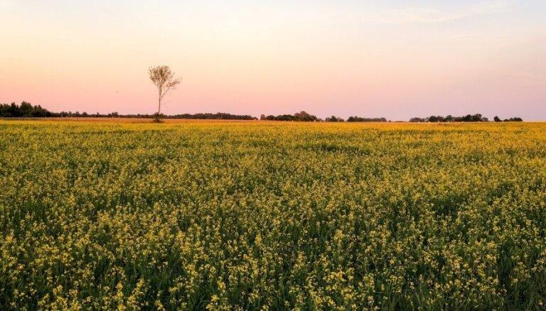 В Литве ищут владельцев земли, которая до сих пор стоит ничья