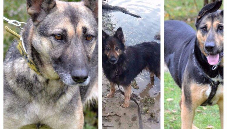 Dzīves nelutinātas suņu dāmas cer atrast vislabākos saimniekus