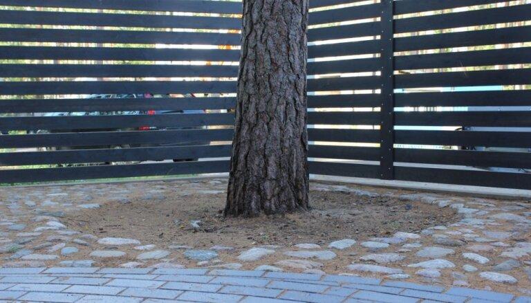 Koku sakņu nosegšana dārzā: atstāt zālīti, stādīt puķes vai noklāt ar mulču