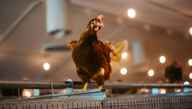 Balticovo инвестировал 10 млн евро в новый комплекс для кур