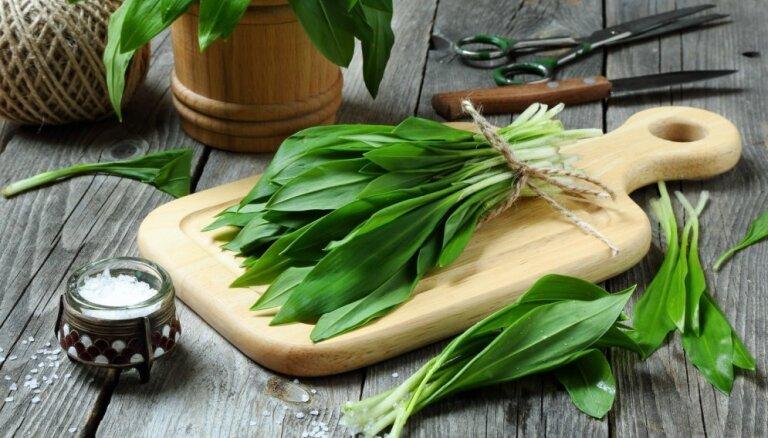 Pavasara delikatese – lakši: 10 receptes un padomi, kā izmantot veselīgos zaļumus