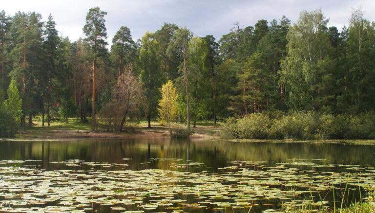 Pēc nepilnām divām diennaktīm atradies Krustpils novadā mežā nomaldījies cilvēks