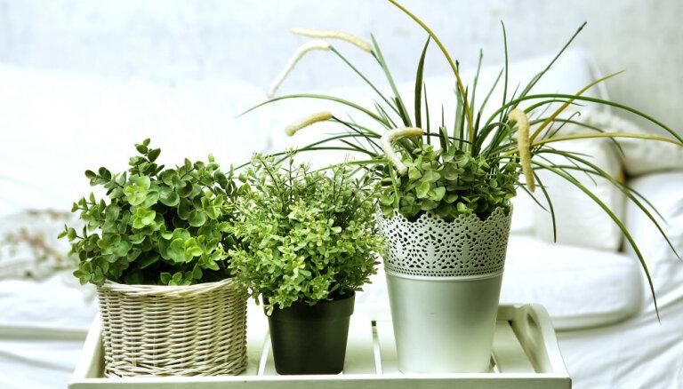Семь комнатных растений для рассеянного хозяина