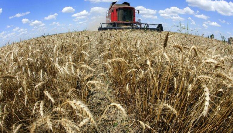 Lielākā daļa graudu Latvijā ir novākti; darbi intensīvi turpināsies vēl šonedēļ