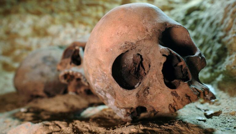 Сенсационная находка: во Франкфурте нашли череп древнего человека