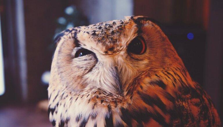 Хитрые, но безобидные: психологические приемы, которые помогут вызвать к вам интерес