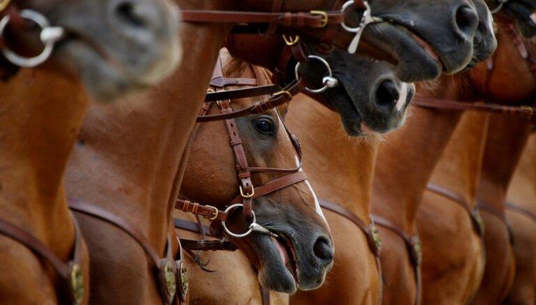 Desmit lietuvieši ar senās žemaišu šķirnes zirgiem dodas 1700 kilometru ceļojumā pa Lietuvas novadiem