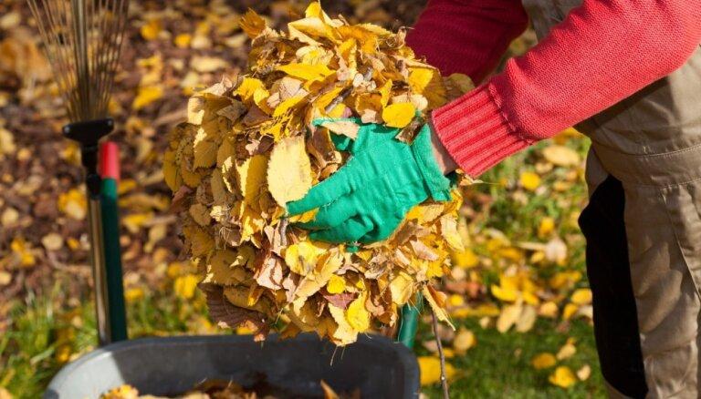 Rīgas apkaimju iedzīvotāji var nodot šoruden savāktās koku lapas