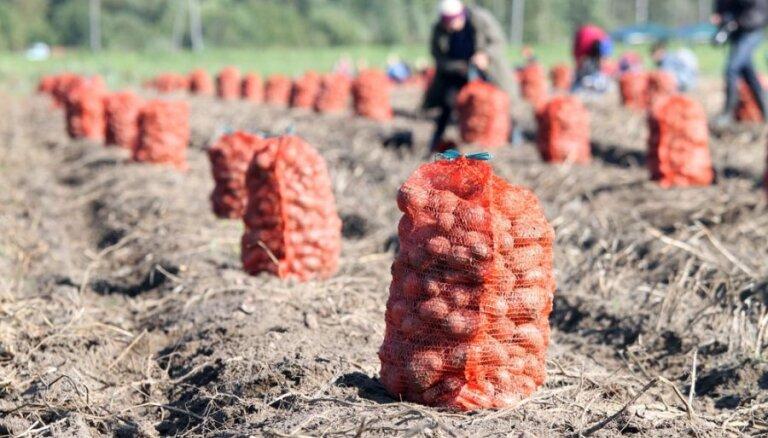 Как получить ранний урожай картофеля: советы профессионала
