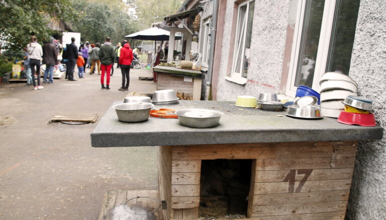 58 собак из пардаугавской квартиры прибыли в приют, нужна помощь