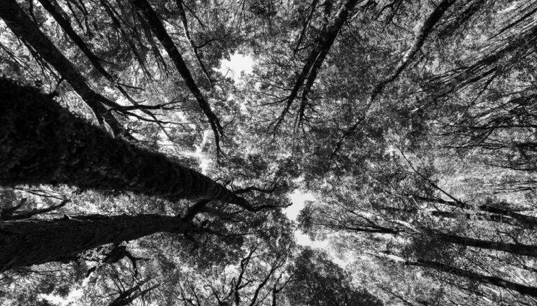 Novembrī Latvijā izskanēs koncertstāsti 'Koku dzīve'