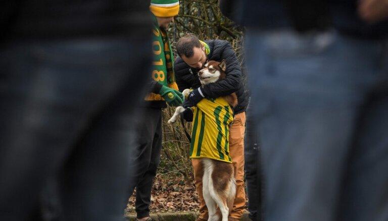 ФОТО: Собака погибшего футболиста Салы продолжает ждать хозяина