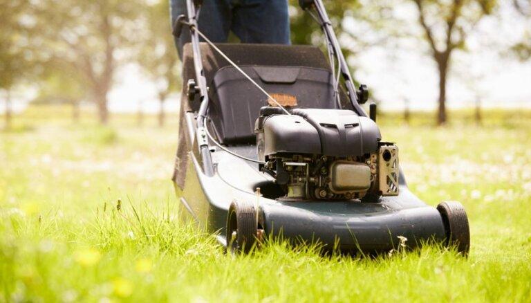 Дачные хитрости: 9 полезных способов использования скошенной травы