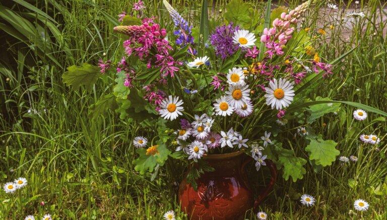 Tematiskas pļavas ziedu un augu kompozīcijas vasaras saulgriežu svinībām