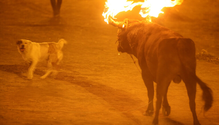 ВИДЕО: 5 кровавых фестивалей, в существование которых трудно поверить