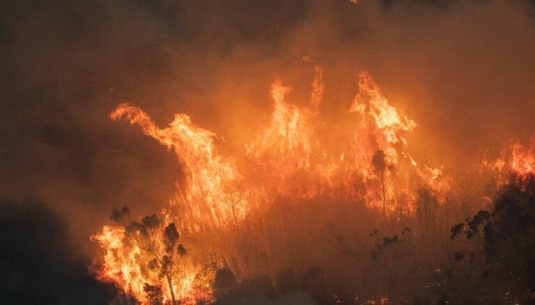 ФОТО, ВИДЕО: Более миллиарда животных погибло в катастрофических пожарах в Австралии