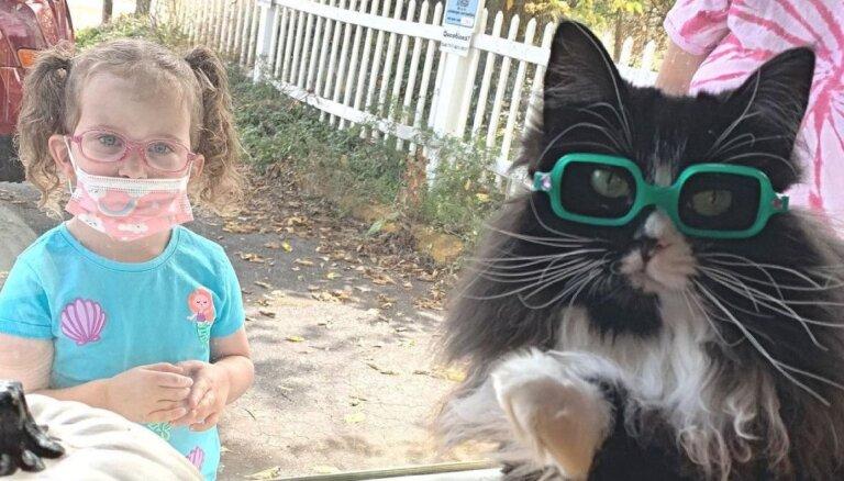 ФОТО, ВИДЕО: Мотиватор 80-го уровня. Кошка, которая убеждает детей носить очки