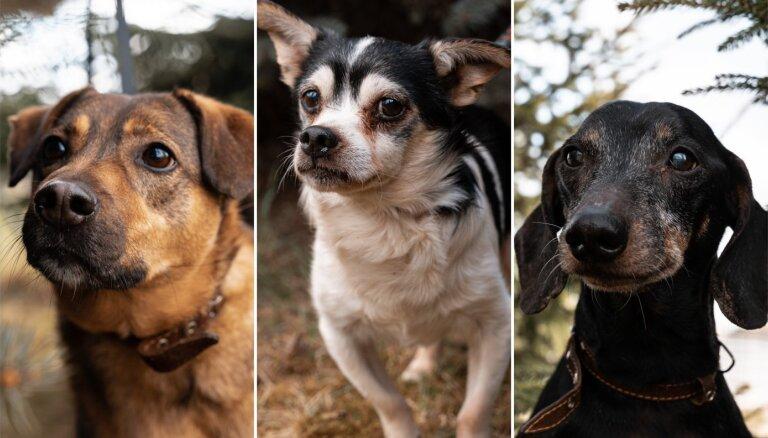 Pieci suņi – seniori, kas meklē uzticamu saimnieku