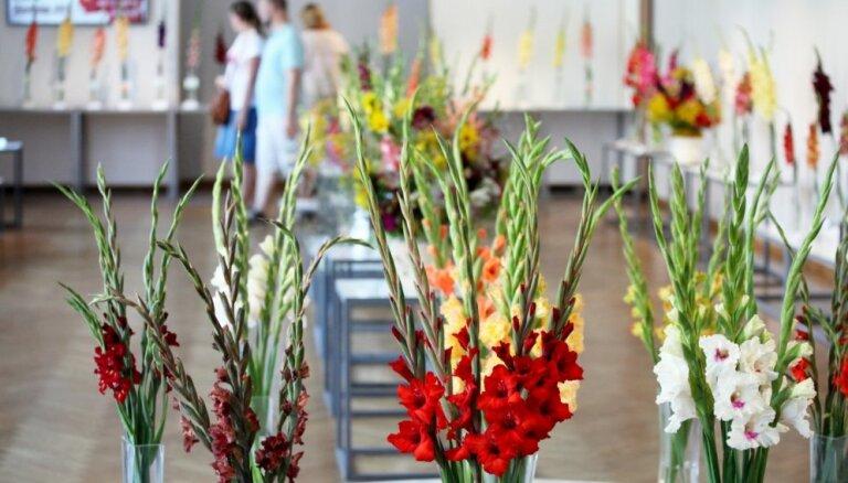 Foto: Dabas muzeju rotā gladiolu izstāde