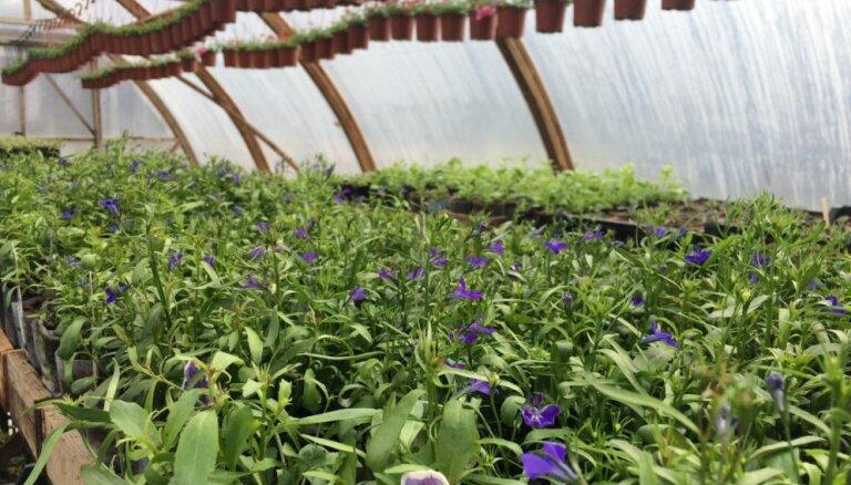 No ziemcietēm līdz eksotiskiem augiem – trīs stādaudzētavas netālu no Rīgas