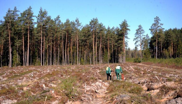 'Latvijas valsts meži' izsludina vērienīgu konkursu meža darbu veikšanai