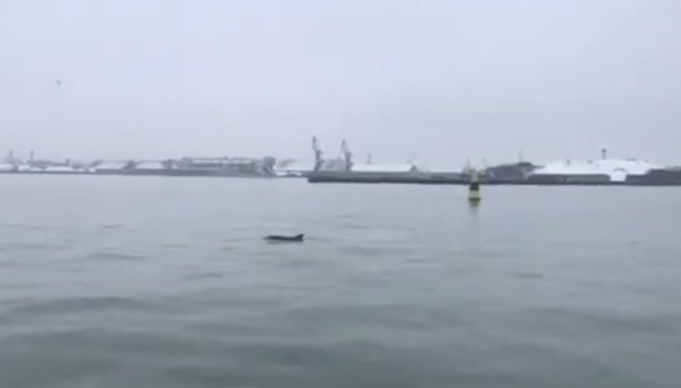Video: Pie Liepājas ostas nofilmēts rotaļīgs delfīns