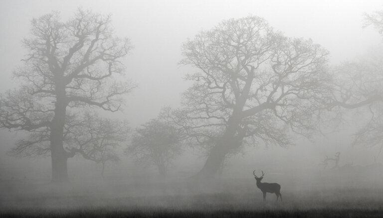 Ночью местами возможны туман и заморозки