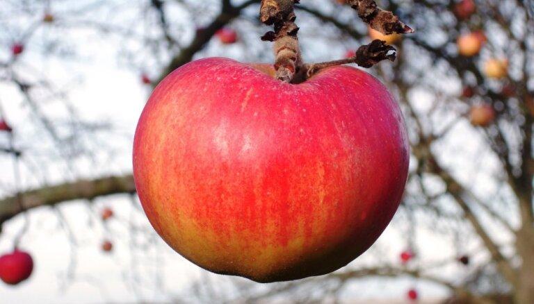 Valdība atbalsta 72,5 tūkstošu kompensāciju izmaksu 15 augļu dārzu īpašniekiem