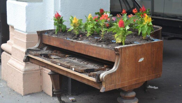 Oriģināls muzikālais dārzs: mūzikas instrumenti pārtop par mājvietu augiem