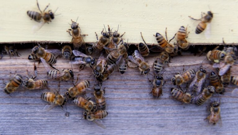 Bitenieki sestdien aicina visus doties uz bišu dravām