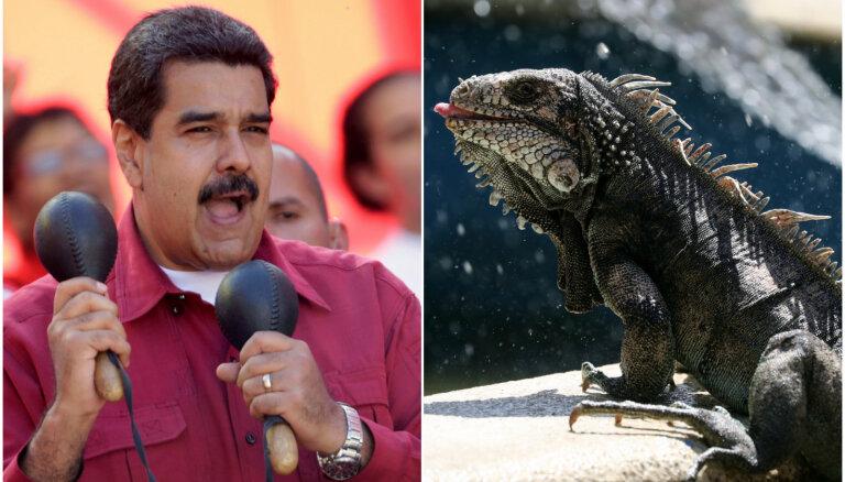 'Maduro diēta': Marakaibo apēstas visas iguānas