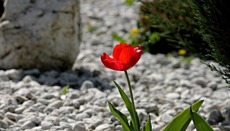 Каменные сады: удобный и опасный тренд