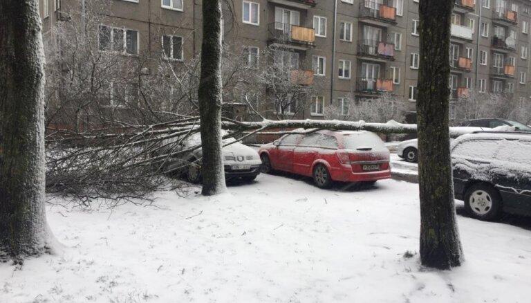 Foto: Brāzmainajā vējā Rīgā uz vairākiem auto uzgāžas koks