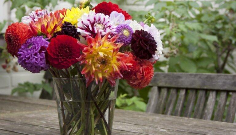 Эффективные и необычные способы оживить цветы, о которых знают только флористы