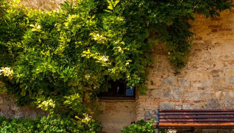 Seši zelta likumi dārza plānošanā