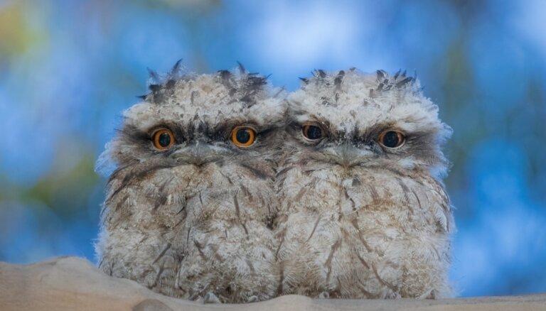 Pēc cītīgas datu analīzes noskaidrots pasaulē 'instagramīgākais' putns